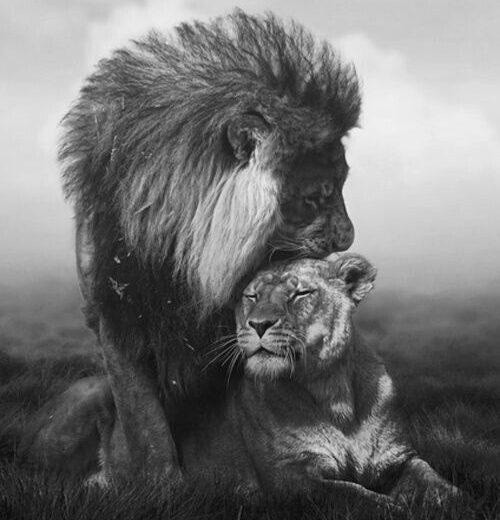 Queen & Warrior